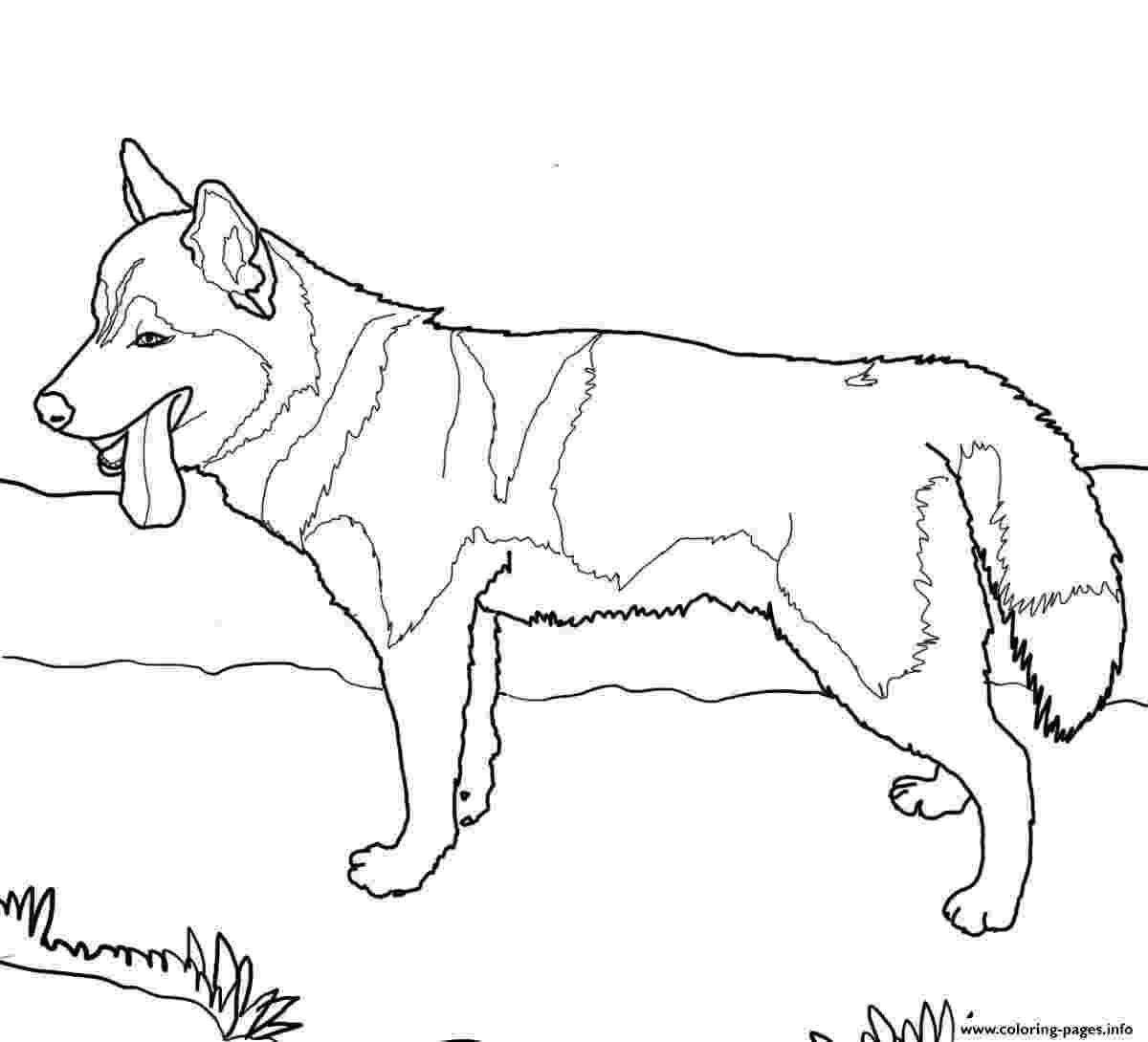 siberian husky coloring pages siberian husky dog coloring pages printable coloring pages siberian husky
