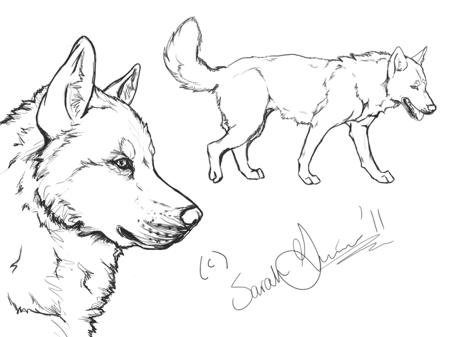 siberian husky coloring pages siberian husky lineart by airhead77 on deviantart pages husky siberian coloring