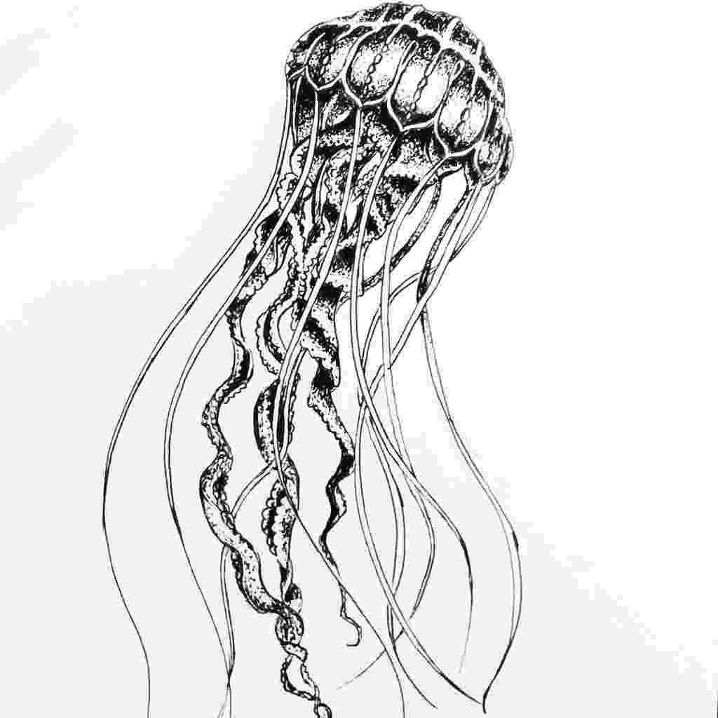 sketch of a jellyfish fhöbik jellyfish by fhöbik artwork via behance jellyfish sketch a of