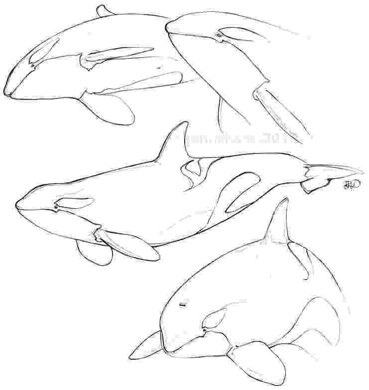 sketch of a whale archives jen richards sketch whale of a