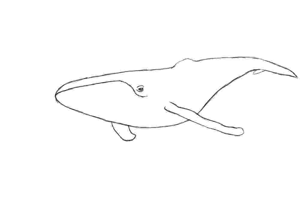 sketch of a whale how to draw a sperm whale step by step sea animals whale a sketch of