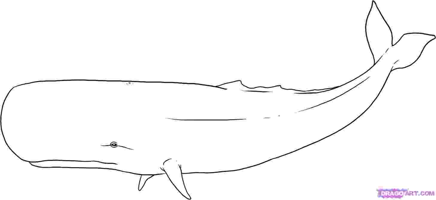 sketch of a whale how to draw a whale draw central whale sketch a of