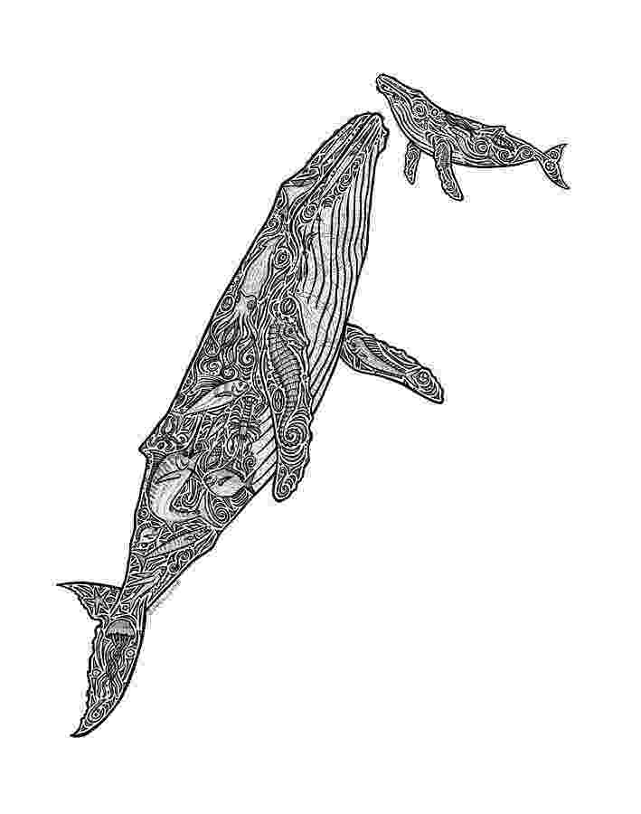 sketch of a whale humpback whale drawings first breath by carol lynne whale a sketch of