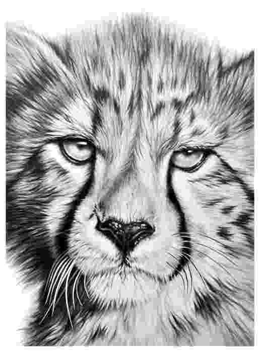 sketch of cheetah 24 animal drawings free psd ai vector eps format of sketch cheetah