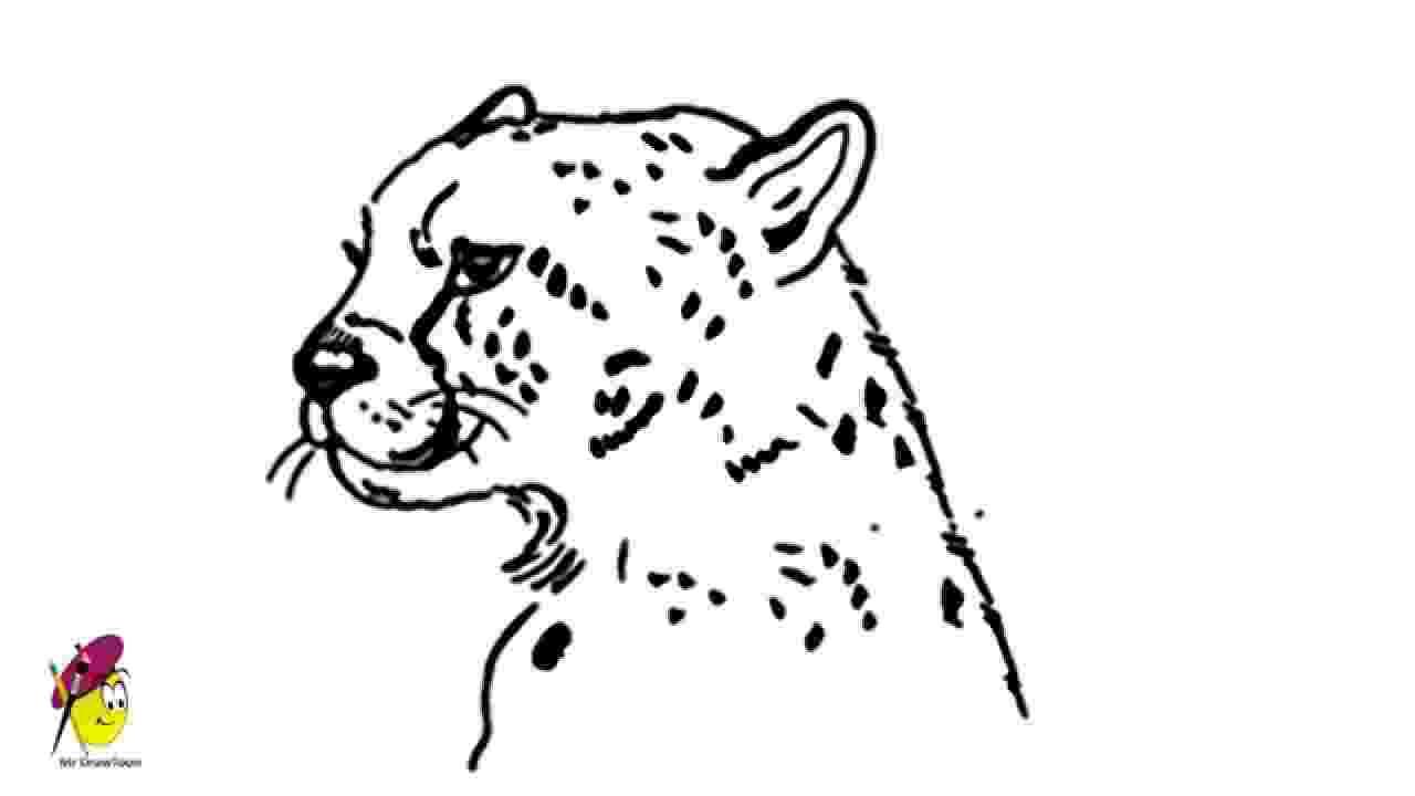 sketch of cheetah cheetah awesome cheetah drawing how to draw a cheetah cheetah of sketch