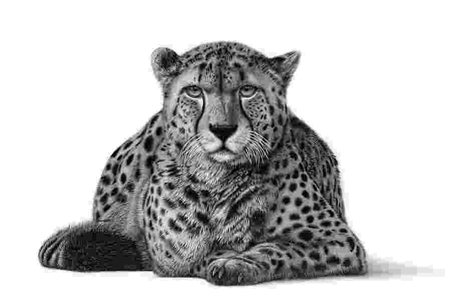 sketch of cheetah cheetah character design process on behance of sketch cheetah