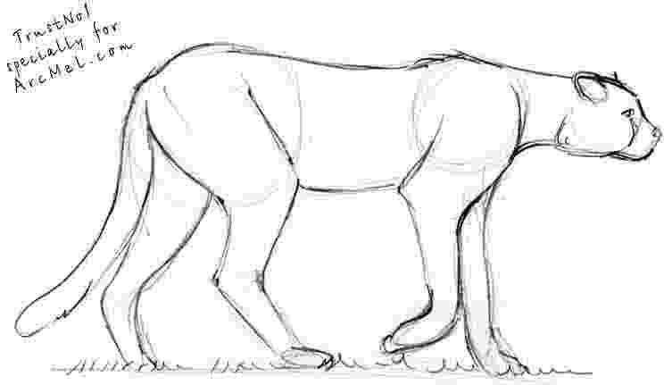 sketch of cheetah cheetah cub 75 art pinterest cheetahs drawings and cheetah sketch of