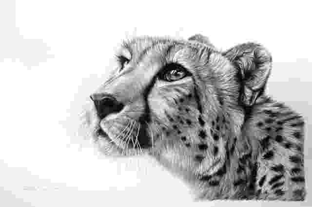 sketch of cheetah cheetah drawing made by richardsymonds in the style of cheetah sketch of