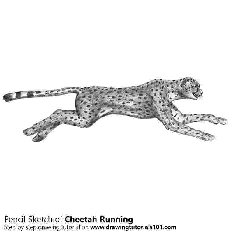 sketch of cheetah cheetah pictures pics images and photos for your tattoo sketch cheetah of