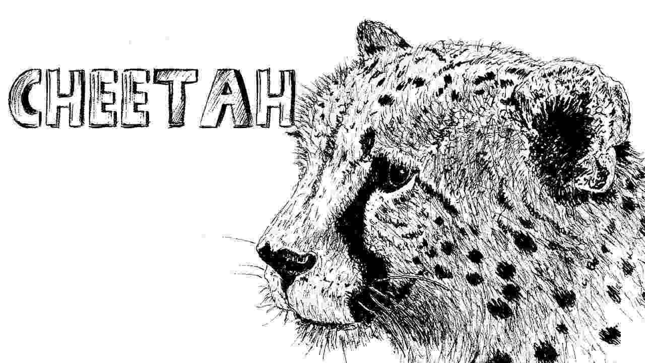 sketch of cheetah how to draw a cheetah in pen ink 1 youtube sketch cheetah of