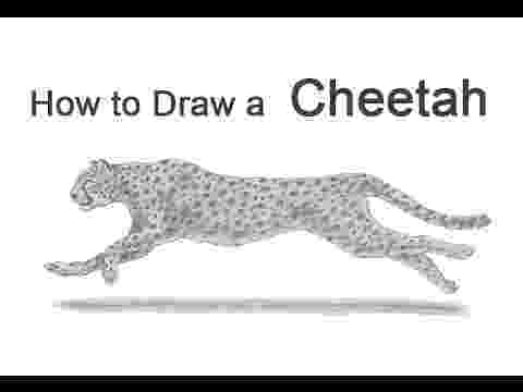sketch of cheetah how to draw a cheetah running youtube sketch cheetah of