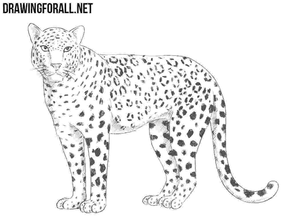 sketch of cheetah learn how to draw a cheetah39s face big cats step by step of cheetah sketch