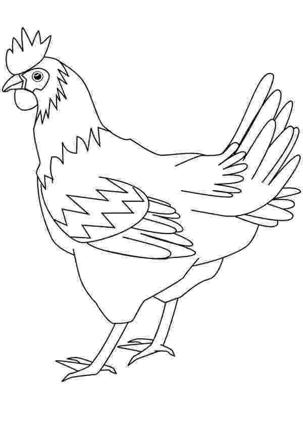 sketch of hen colorable hen line art free clip art sketch hen of