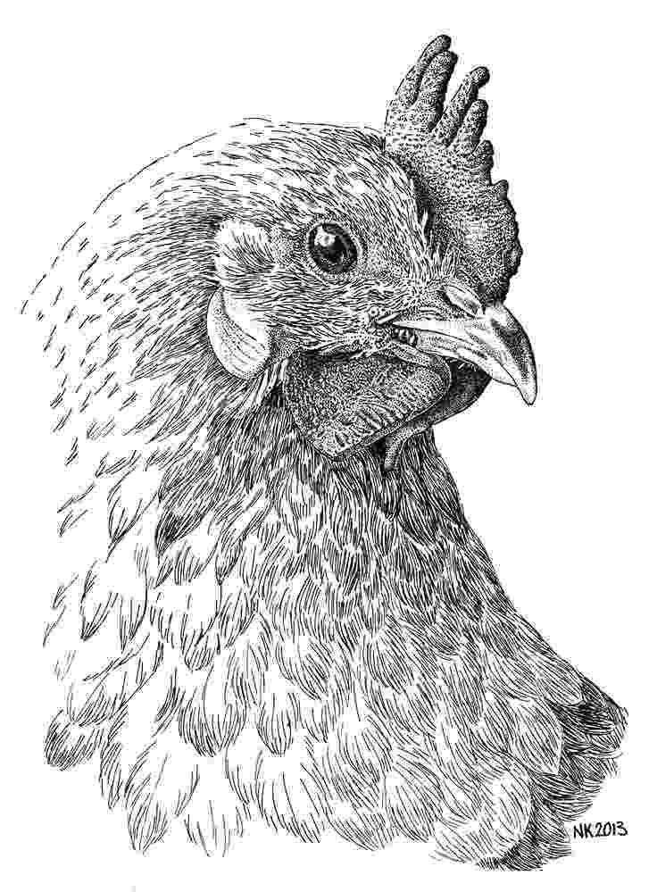 sketch of hen how to draw a hen sketch of hen