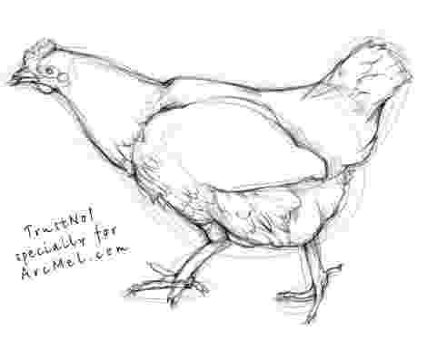 sketch of hen picture of hen in drawing clipart best hen sketch of