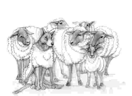sketch of sheep 125 sweater sheep of sheep sketch