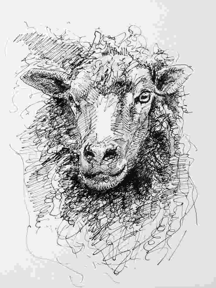 sketch of sheep best 25 sheep drawing ideas on pinterest how to draw sketch of sheep