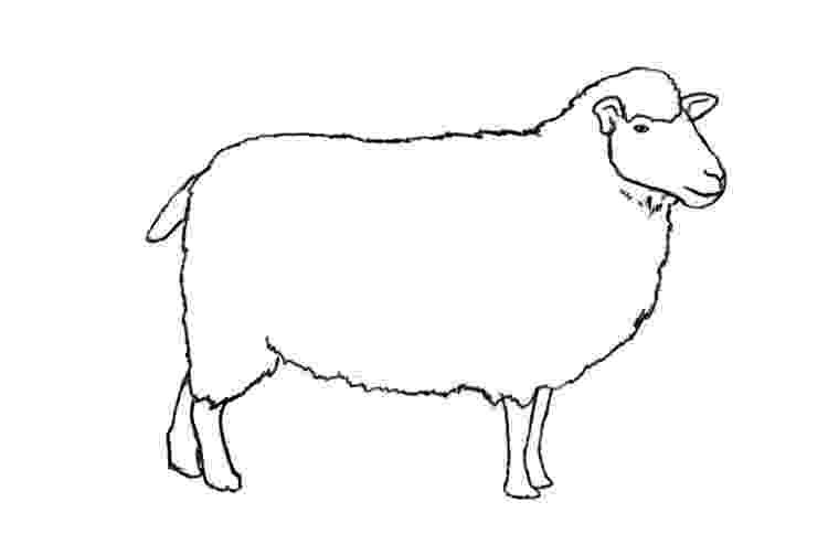 sketch of sheep how to draw a sheep draw central sheep sketch of