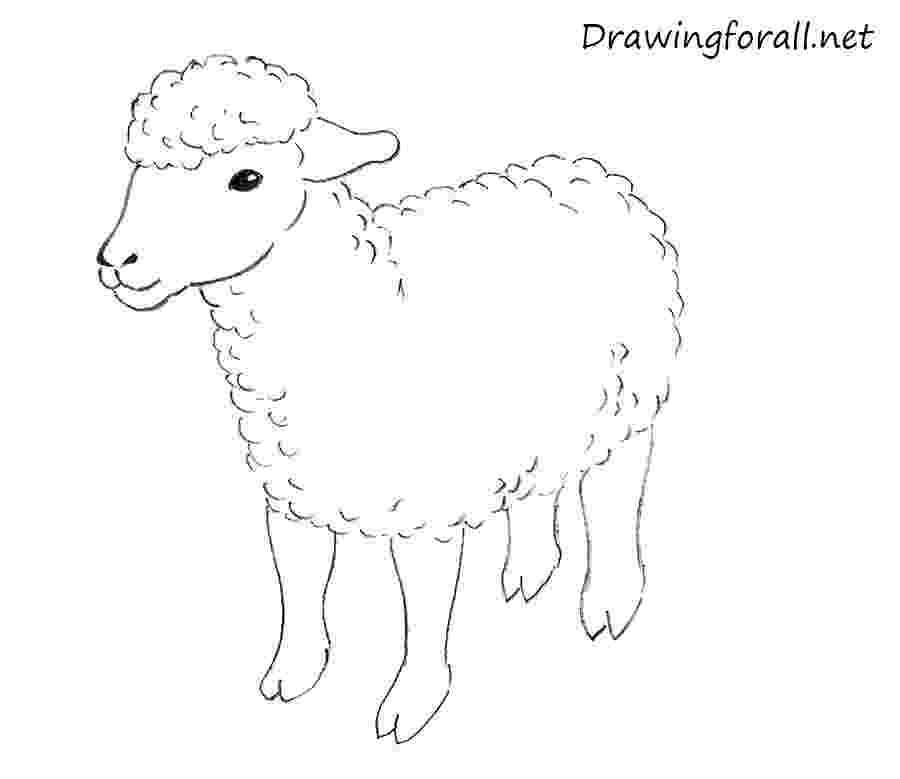 sketch of sheep how to draw a sheep for kids drawingforallnet sketch of sheep