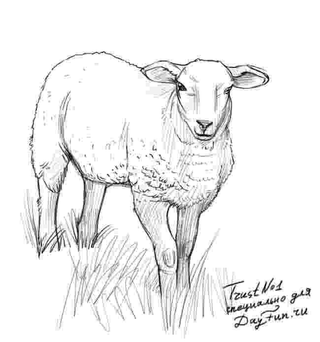 sketch of sheep how to draw a sheep step by step arcmelcom of sheep sketch