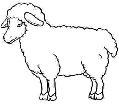 sketch of sheep how to draw a sheep step by step drawing tutorials sheep of sketch