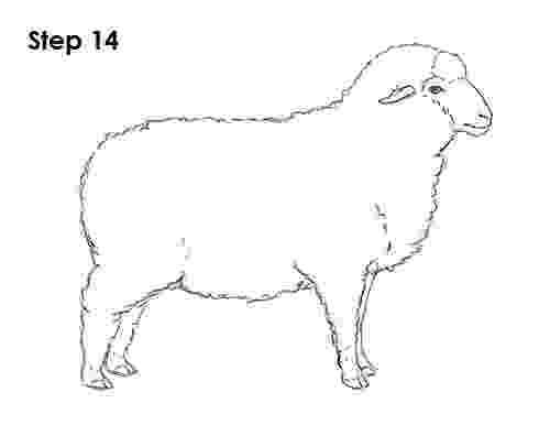 sketch of sheep sheep drawing 14 sheep drawing drawings horse drawings of sheep sketch