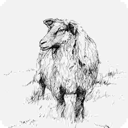 sketch of sheep sheep sketches of sketch sheep