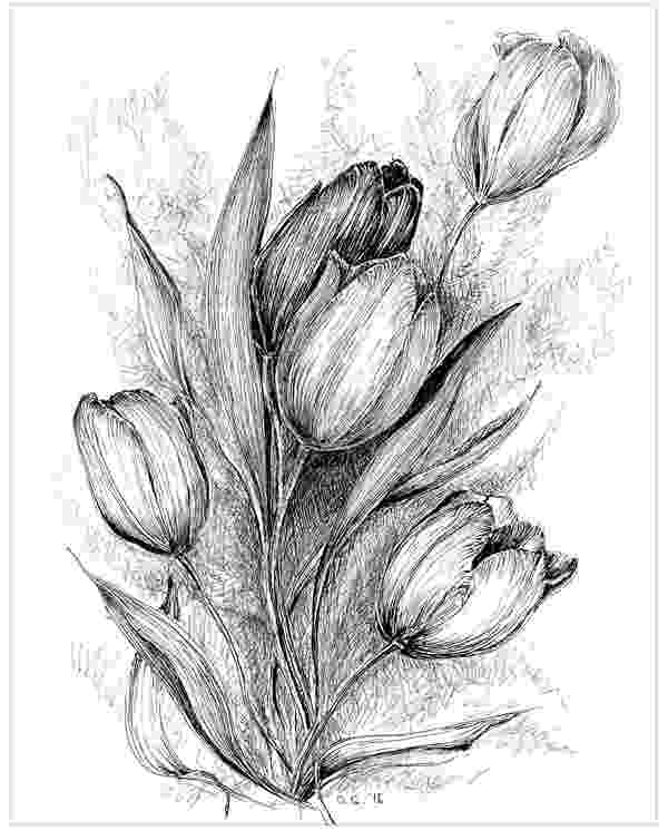 sketch of tulip flower 19 flower drawings free premium templates flower tulip of sketch
