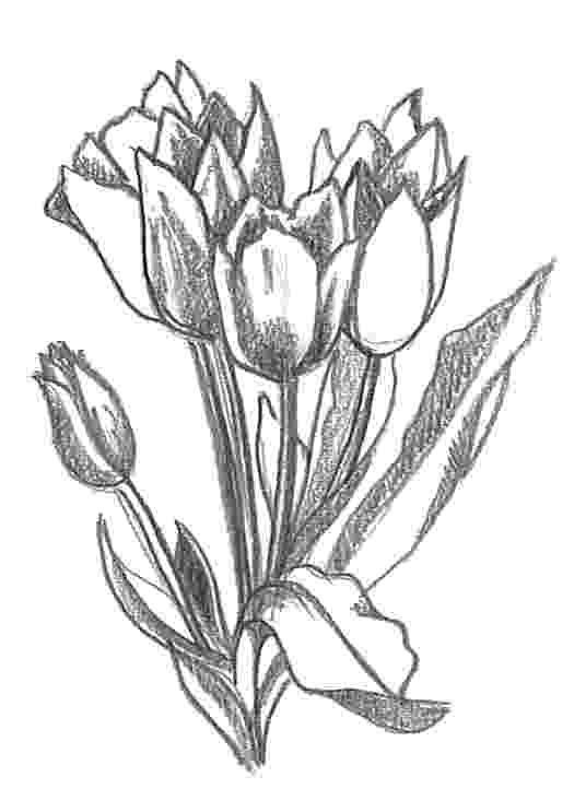 sketch of tulip flower hand drawn bouquet of tulips tied up by a ribbon stock tulip sketch flower of