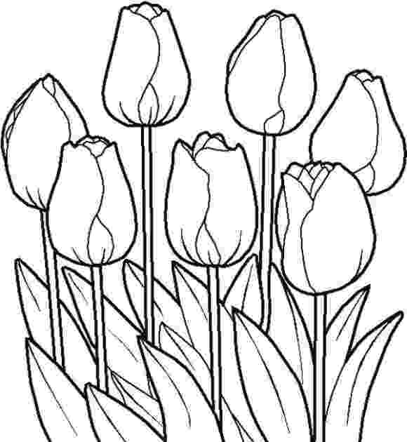 sketch of tulip flower pin by sofy garcia on tattoos in 2019 pencil drawings of tulip sketch of flower