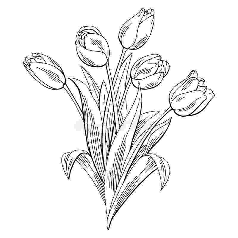sketch of tulip flower tulip flower graphic black white isolated bouquet sketch of sketch tulip flower
