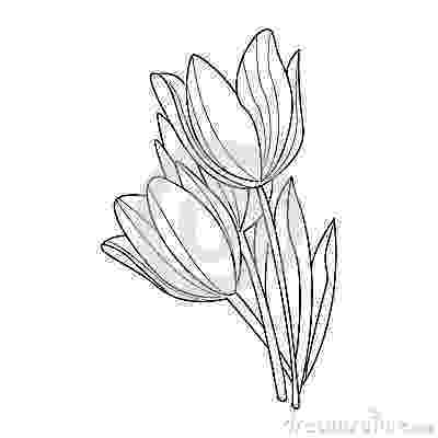 sketch of tulip flower tulip flower sketch clipart best of tulip flower sketch
