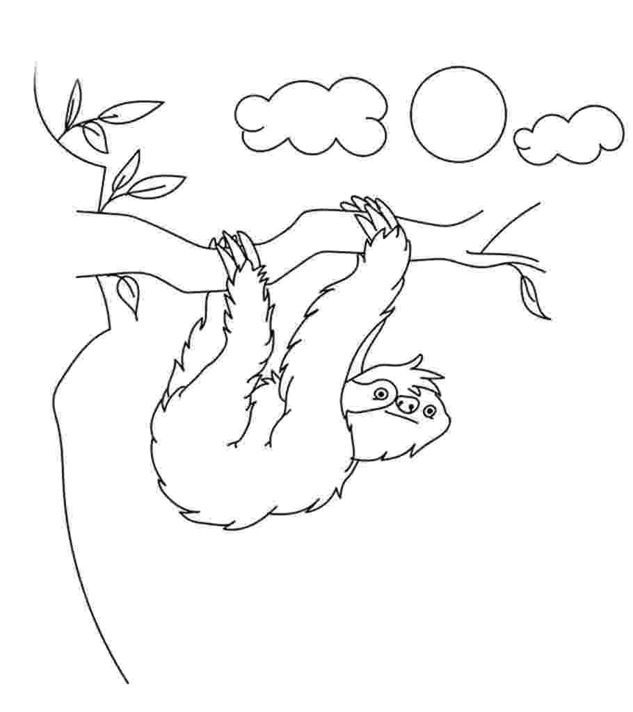 sloth coloring pages free sloth coloring pages sloth coloring pages