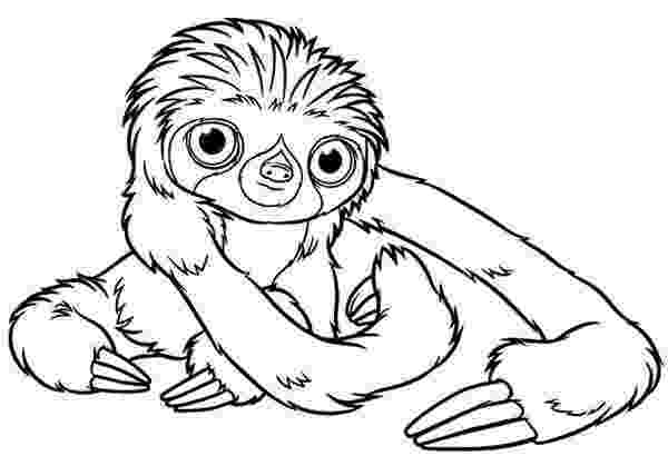 sloth coloring pages how to draw a sloth step by step rainforest animals sloth coloring pages