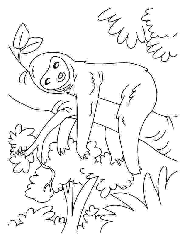 sloth coloring pages lazy sloth coloring pages download free lazy sloth sloth coloring pages