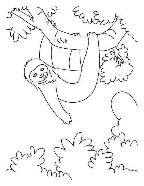 sloth coloring pages sloth coloring page free printable coloring pages pages sloth coloring