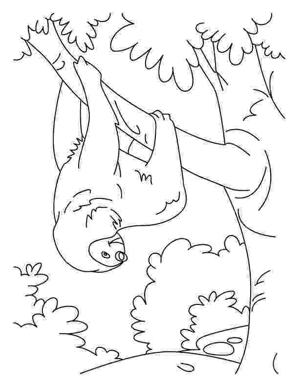 sloth coloring pages tumbling sloth coloring pages download free tumbling sloth coloring pages