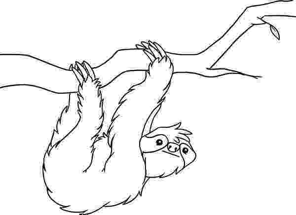 sloth coloring pages two toed sloth on tree coloring page free printable sloth pages coloring