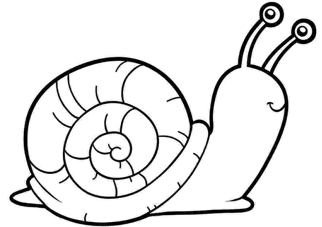 snail pictures to color snail coloring page getcoloringpagescom snail color pictures to