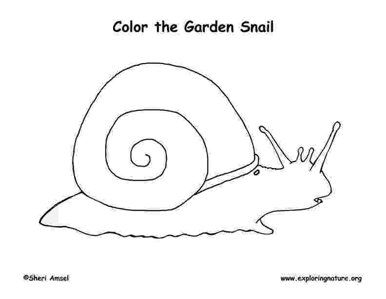 snail pictures to color snail coloring page getcoloringpagescom to pictures color snail