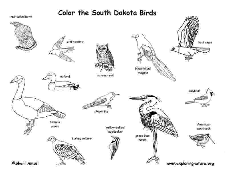 south dakota state bird north dakota state bird flower and tree best flower site dakota south state bird