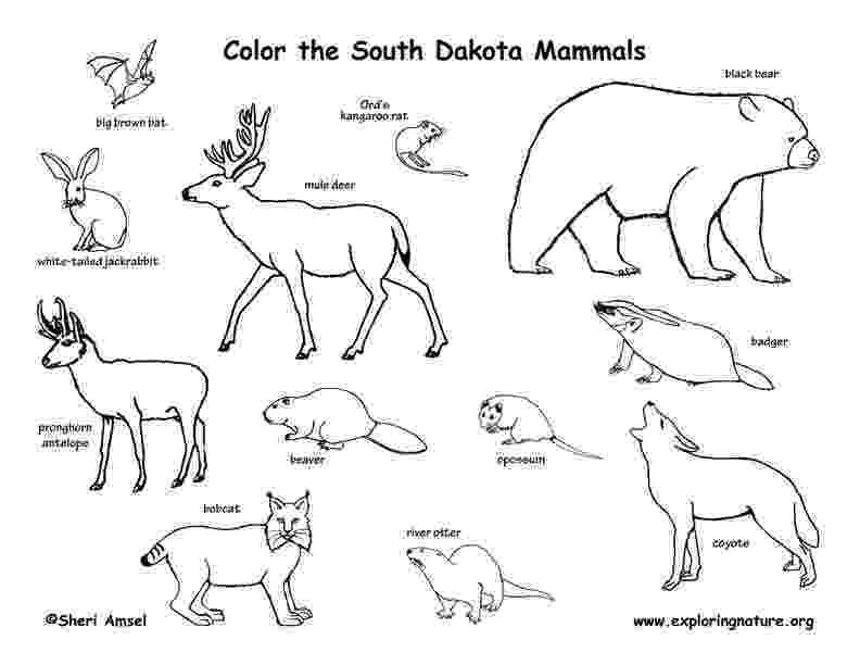 south dakota state bird south dakota map template 8 free templates in pdf word south state dakota bird