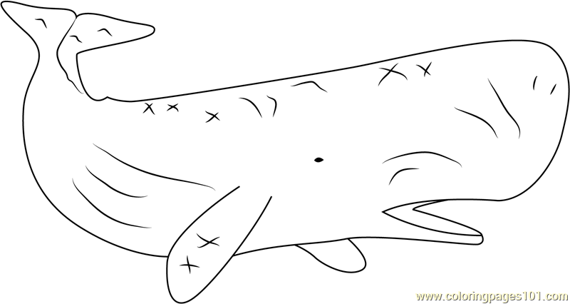 sperm whale color sperm whale and two pinguin coloring page netart color whale sperm