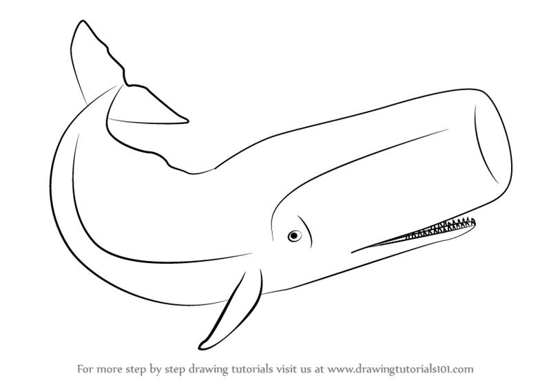 sperm whale sketch sperm whale sketch at paintingvalleycom explore sketch sperm whale