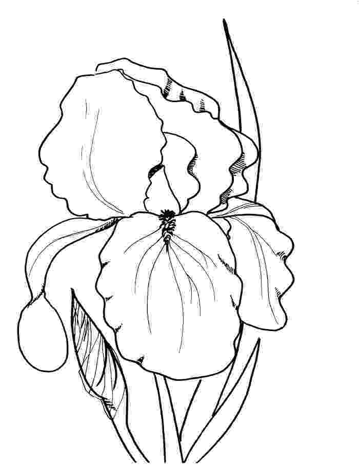 spring flower coloring pages spring flowers coloring page free printable coloring pages flower spring coloring pages