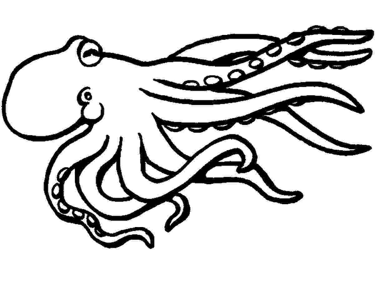 squid coloring page squid coloring pages to download and print for free page coloring squid