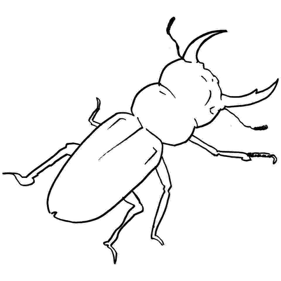 stink bug coloring page animal beetle bug free vector graphic on pixabay bug coloring page stink