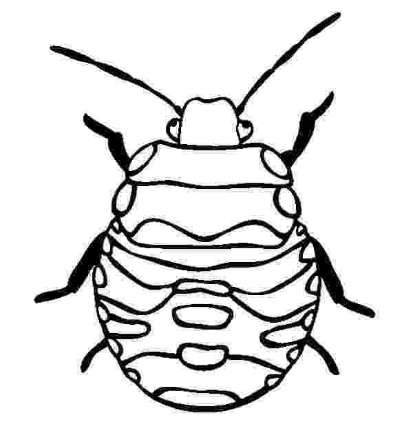 stink bug coloring page brown marmorated stink bug coloring page free printable stink bug page coloring