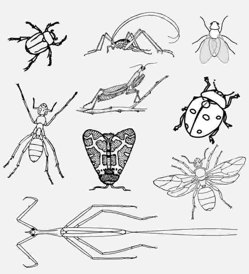 stink bug coloring page stink bug pages coloring pages coloring stink page bug