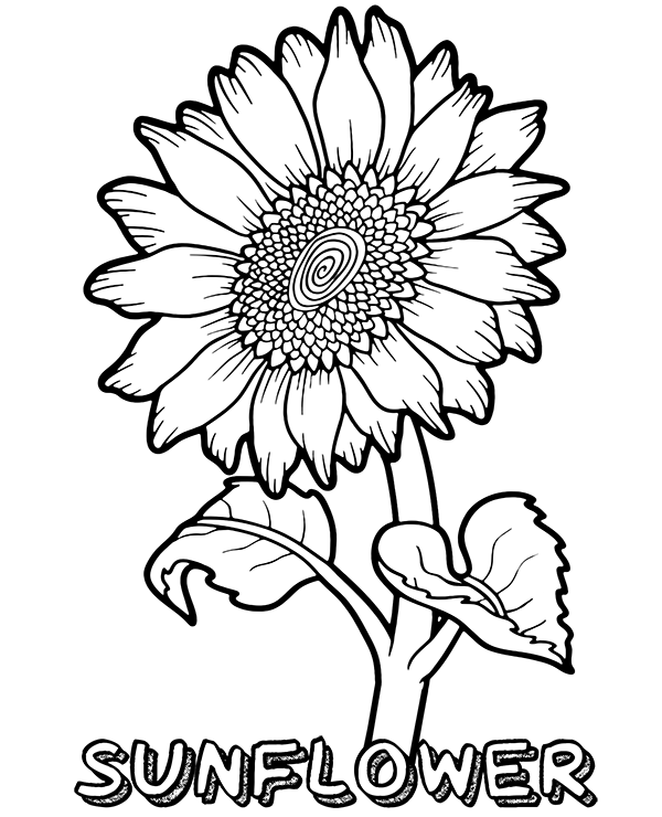 sunflower color sheet free printable sunflower coloring pages for kids sunflower color sheet